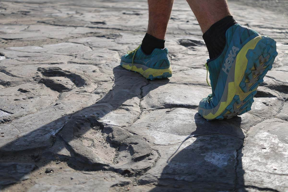 Ancient footprints in the Tanzanian mud